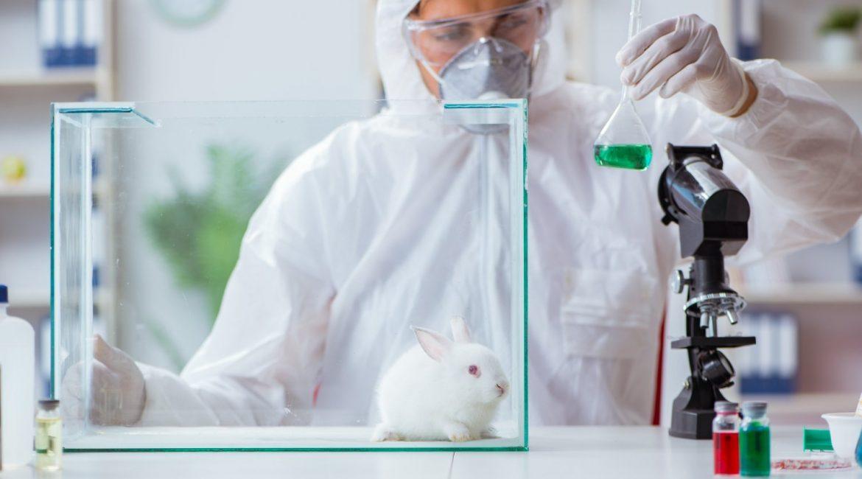w laboratorium naukowiec królik w akwarium probówki